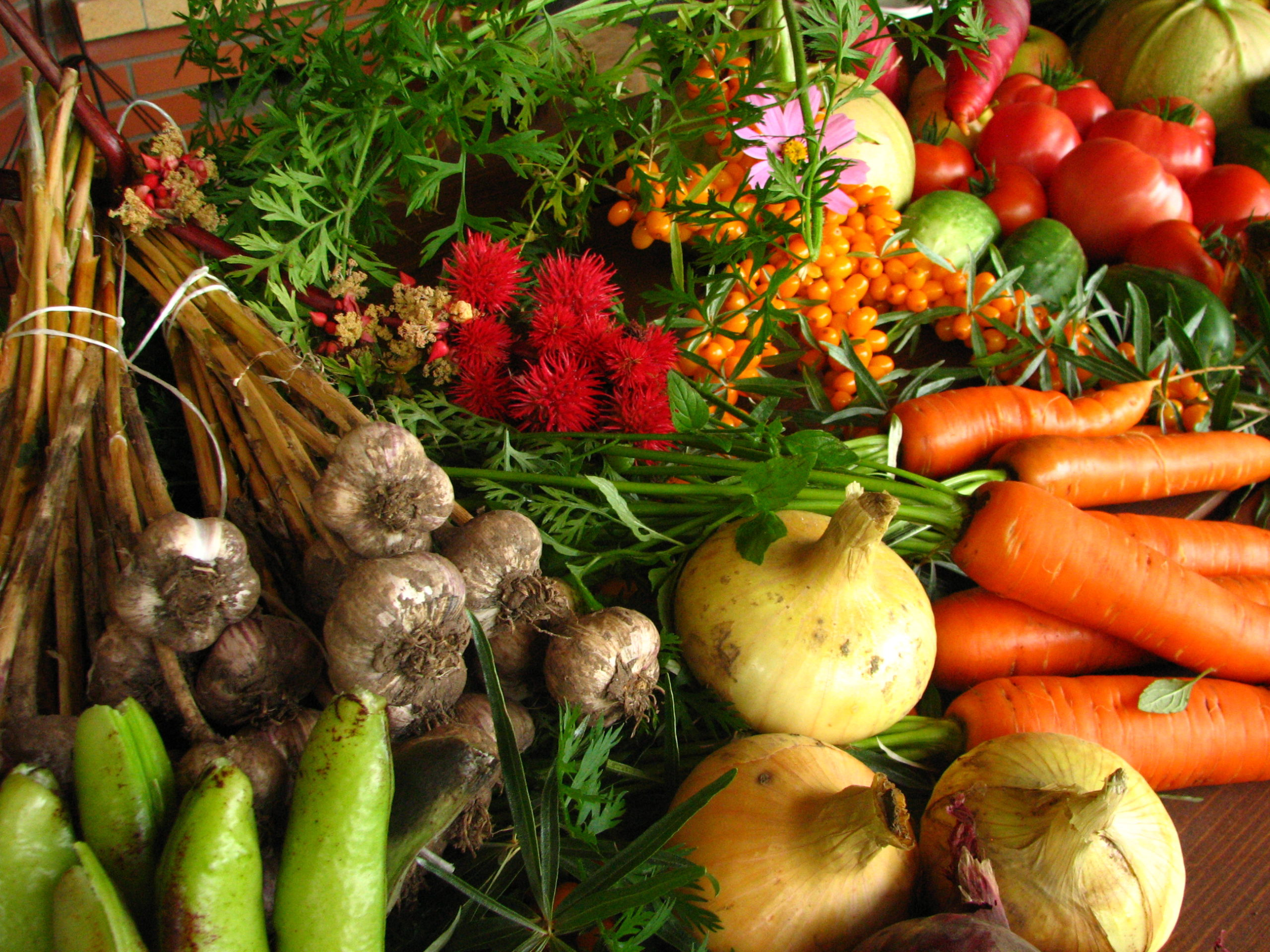 Organic - Herbs and Vegetables